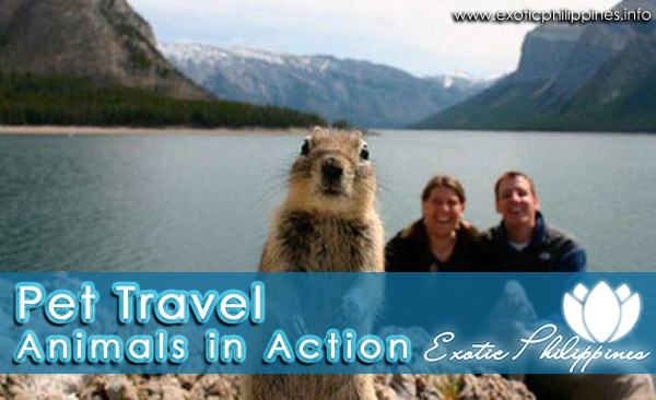 Pet Travel - Animals in Action