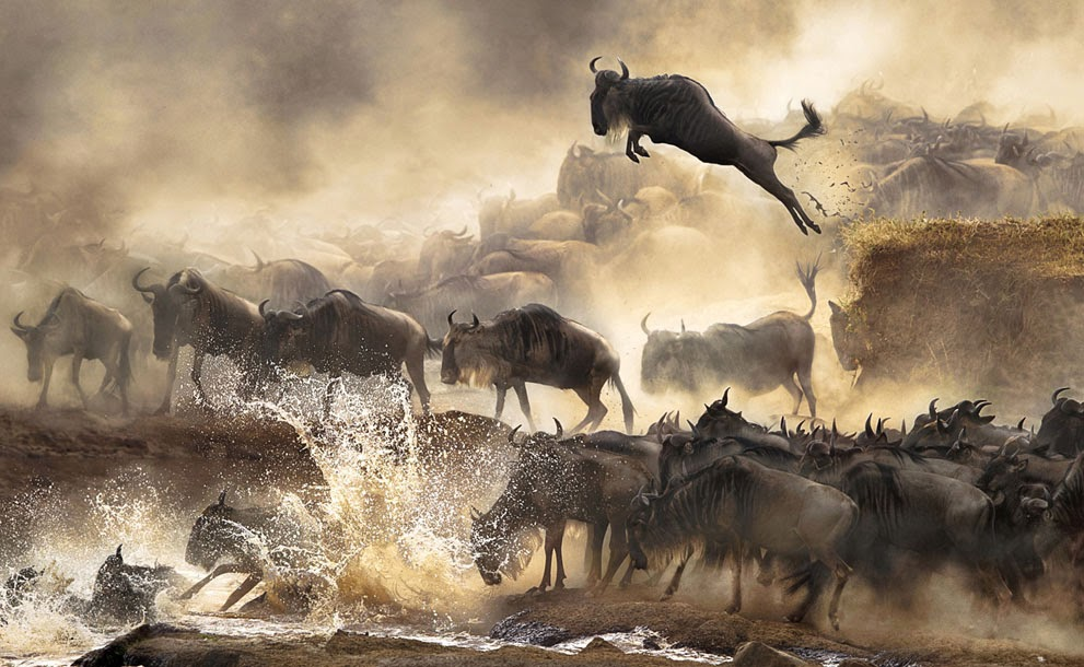 One of the best Picture of Sony World Photography Awards