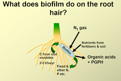 BioFilmBioFertilizer-blog-post