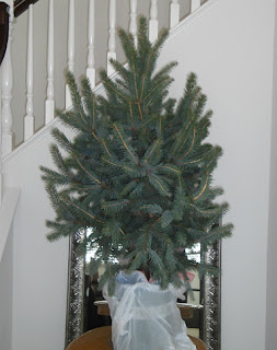 Anyone Can Decorate Christmas Trees Artificial Or Real