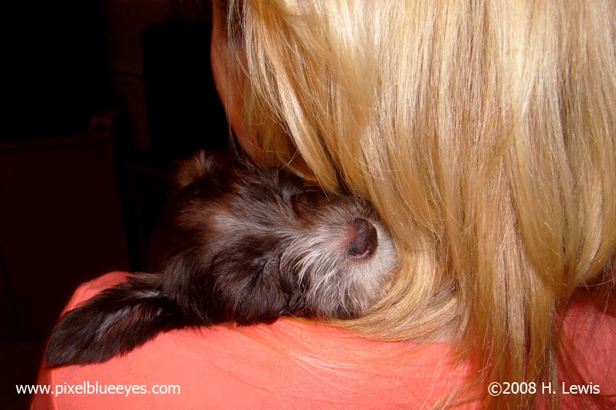 Pixel Snuggled in her Mommy's Arms with her sleepy head on Mommy's neck & shoulder, the first day they met