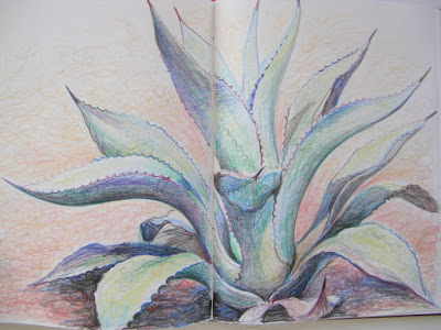 Agave coloured pencil drawing in sketchbook by Shevaun Doherty