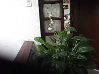 for rent by owner in Bogota Colombia