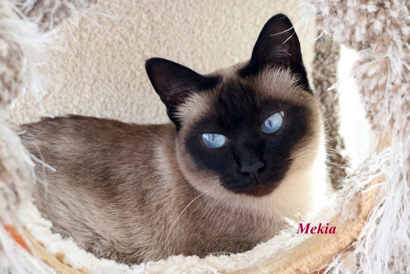 Mekia now 4 yrs old , waiting on the right home.