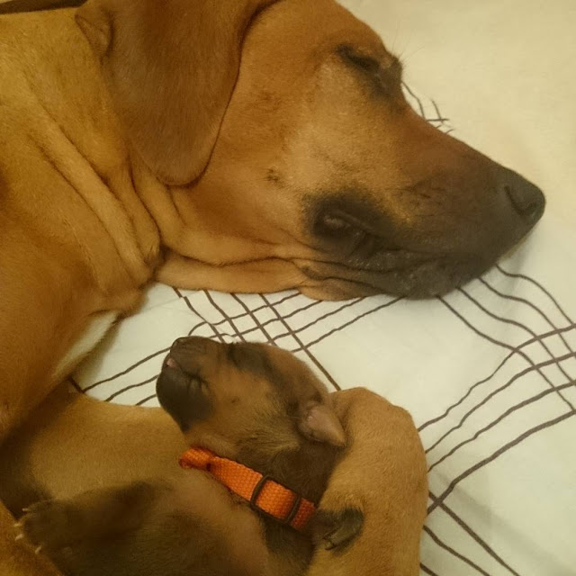 Các em cún đáng yêu chào đón thế giới mới ảnh 2