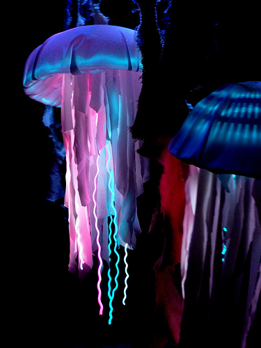 est la production et l   233 mission de lumi  232 re par un organisme vivant    Jelly Fish Costume