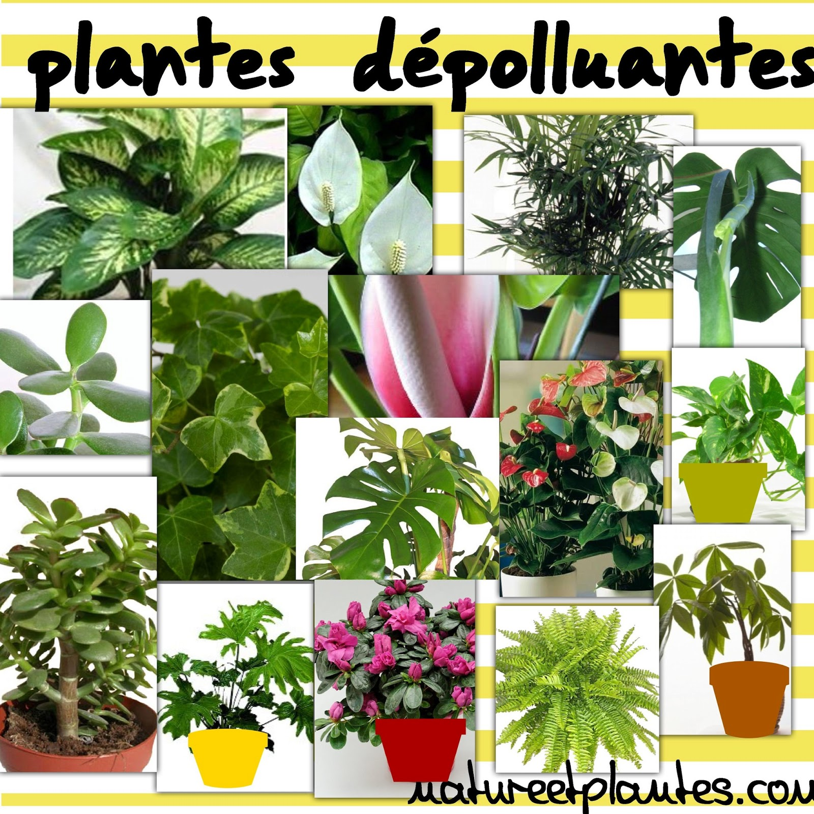 Blog nature et plantes assainir sa maison par les plantes for Les plantes decoratives