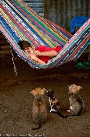 Funny kid and animals