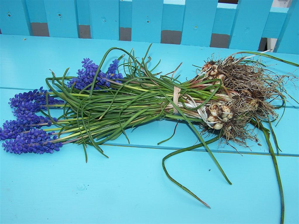 Perennial Passion: Grape Hyacinth Bouquet