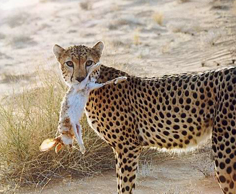 especie natural: