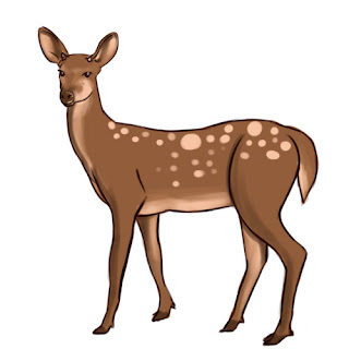 how to draw deer - step 8