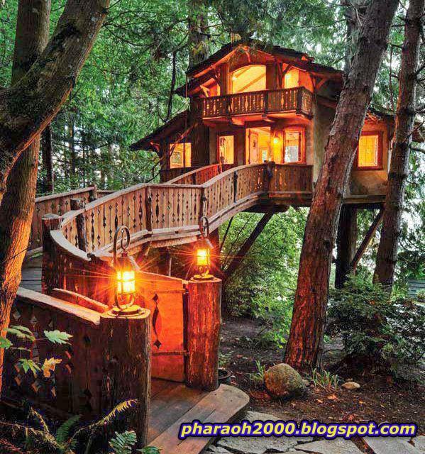 منزل شجرة رائع الجمال بسانت مونيكا ولاية كاليفورنيا