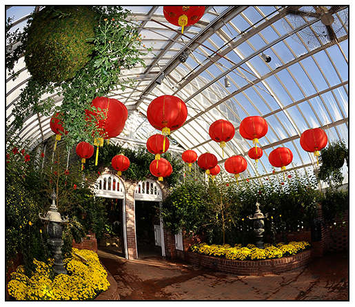 Growing with plants historic victorian glasshouses at the phipps red chinese paper lanterns float above golden chrysanthemums on the opening day of the annual fall flower show at pittsburghs phipps conservatory mightylinksfo