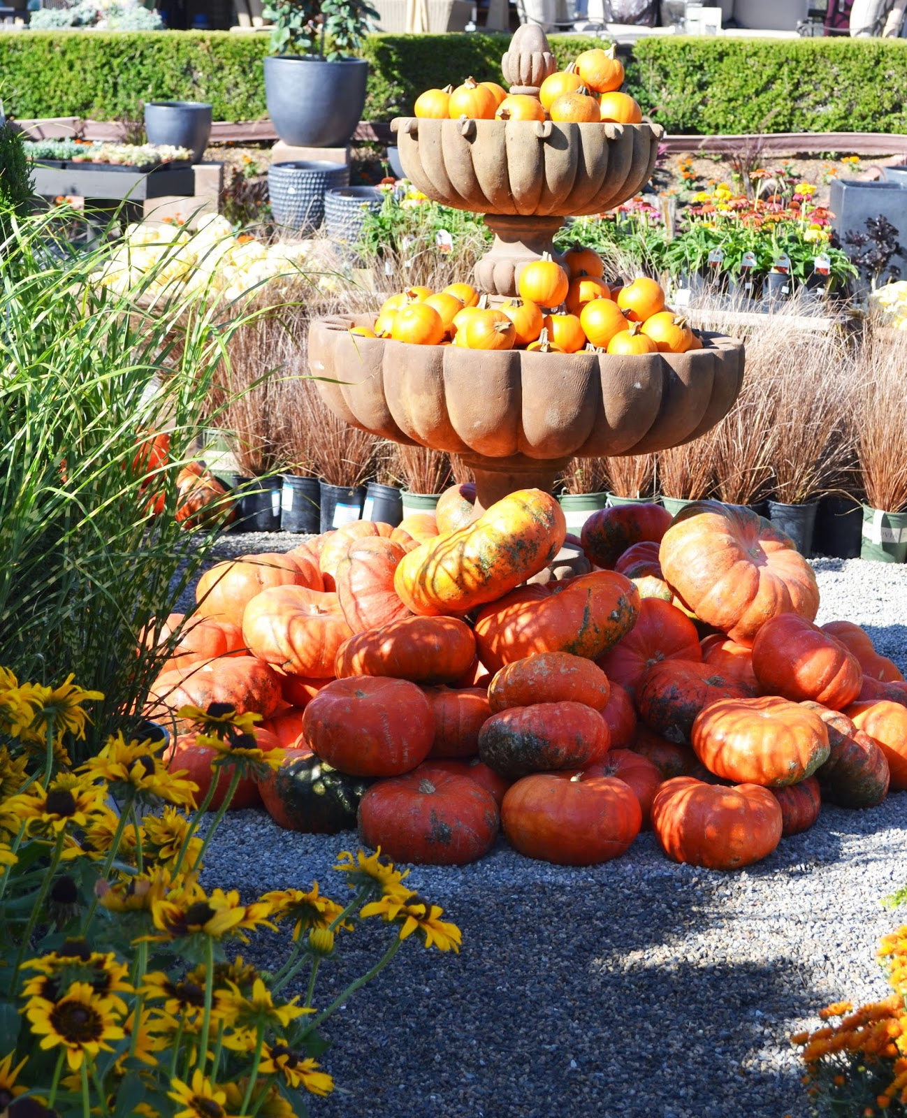 Welcome. I Am So Happy That You Stopped By. I Am Going To Rogeru0027s Gardens  In Newport Beach To Look For Pumpkins And I Would Love To Take You With Me.