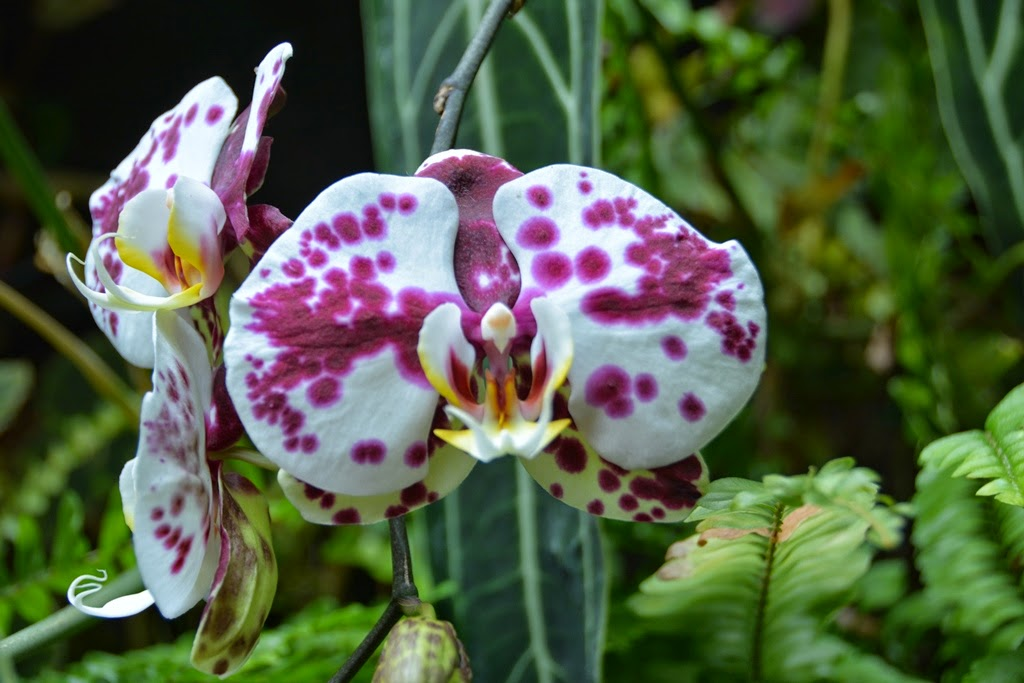 Cloud Forest Singapore orchid