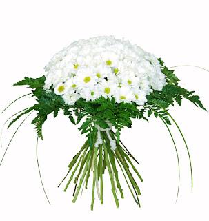 Ramo de novia de margaritas blancas