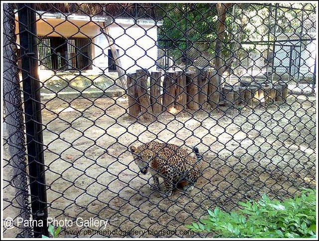 Patna Zoo animals