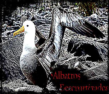 Albatros Descuartizados