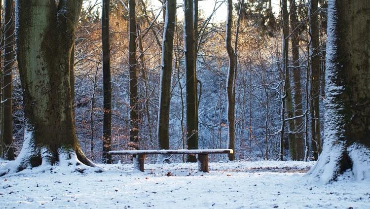 Skovtur i juleferien for hele familien