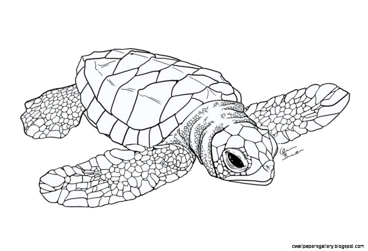 Baby sea turtle I started a while ago Probably Bio Art