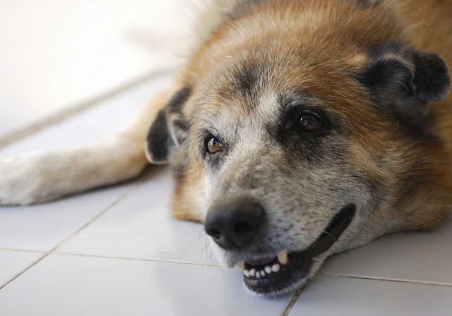 Hundeetisk Råd: Nej til aktiv dødshjælp