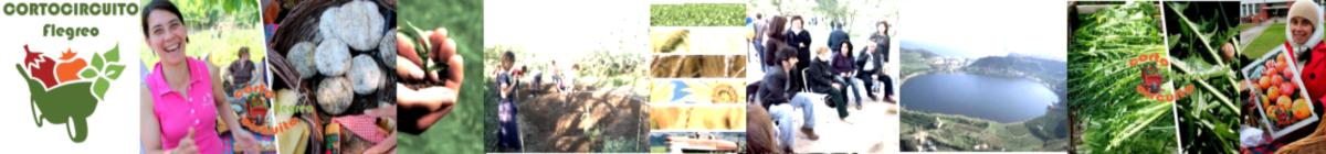 CortoCircuito Flegreo - Sito Web e Blog dell' associazione della filiera corta flegrea