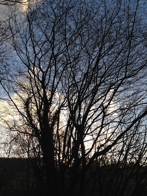 Silhouetted trees in the late afternoon sun
