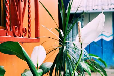 flores tropicales de mi jardin