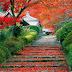 As Folhas do Jardim de Anielh V