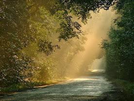 ...ahol a fény szitál...