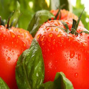 Dica-tomates-saladas