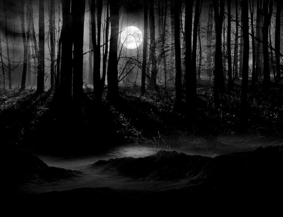 dark forest landscape 1 HD Wallpaper  Landscape Wallpapers