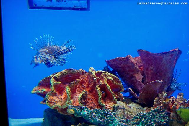 REVISIT: MANILA OCEAN PARK