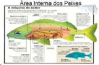 Foto das areas e membros internos dos peixes