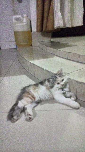 foto-kucing-imut_05