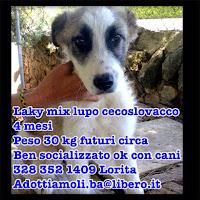 cucciolo adozione cane bari pastore cecoslovacco
