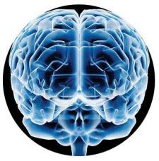 Todos los datos digitales del mundo son equivalentes al de un cerebro humano