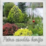 Rózsákról, örökzöldekről, lombhullatókról elsőkézből