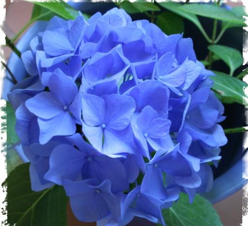Flores mas bellas - Flores mas bonitas ...