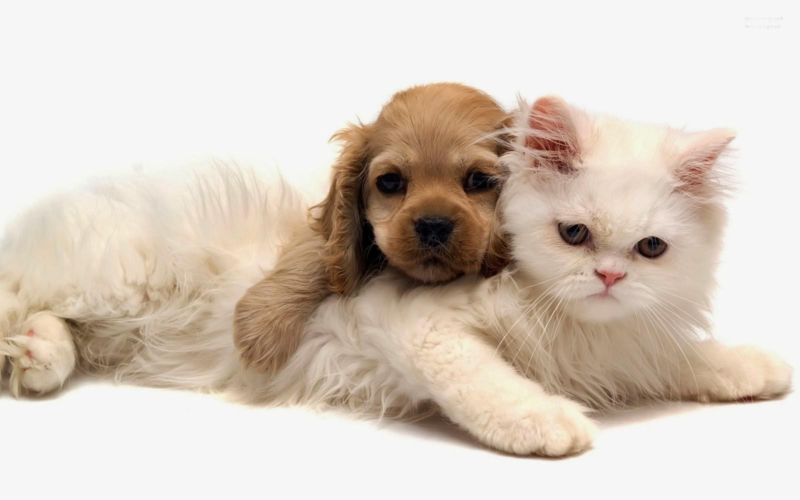 Image result for ความสันโดษของแมวกับหมา
