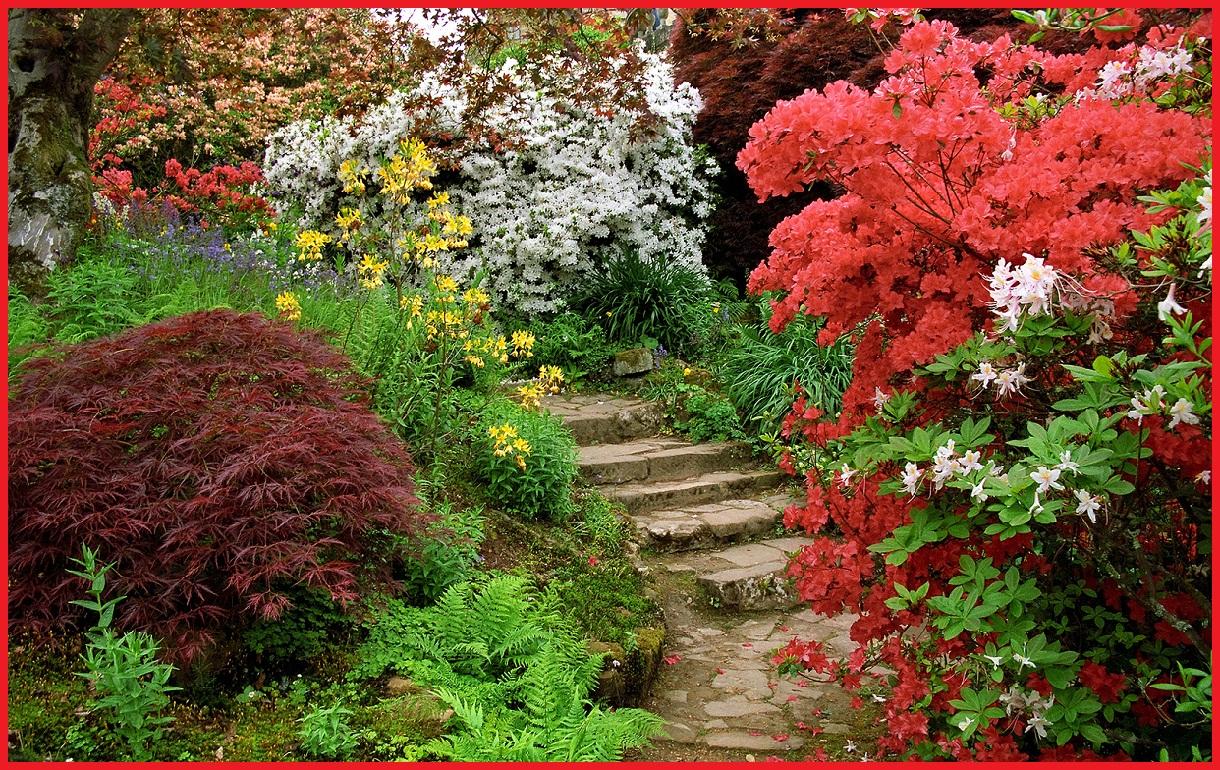 http://3.bp.blogspot.com/-UaBtA_Ko55k/UDdB0k3oUOI/AAAAAAAAArA/Ck_Xcdv8kcM/s1600/1151353-1220x770-Flowering-azaleas-ferns-and-acers-bordering-a-path.jpg