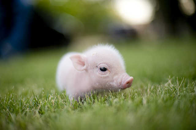 Cutest Baby Animals Of All Time