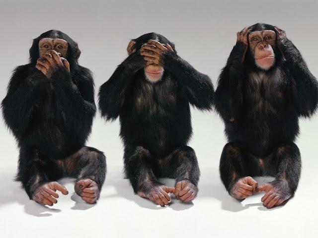 monos desnudos