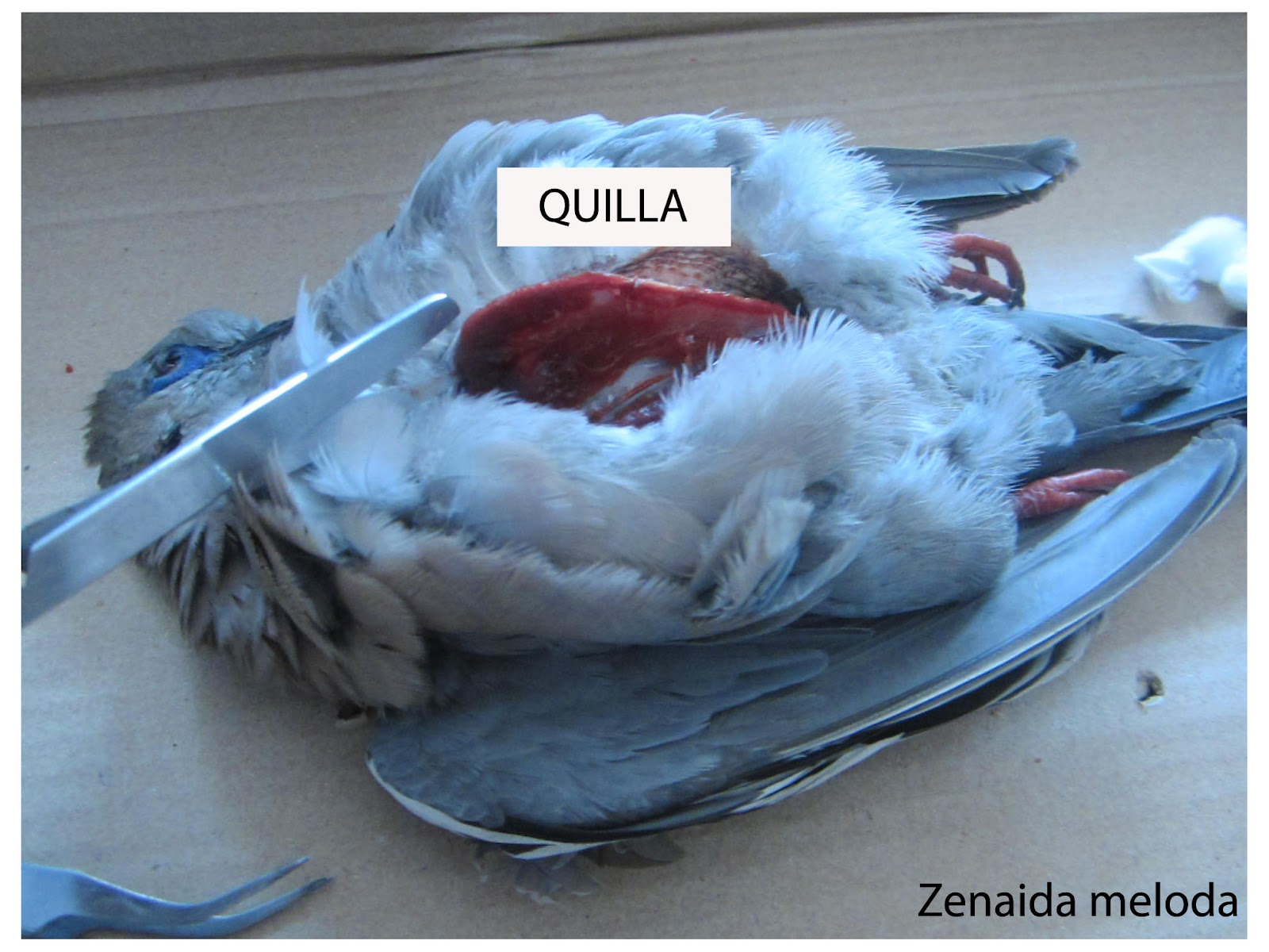 AMIGOS PARA SIEMPRE: zoología