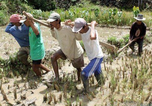 Alat Pertanian Tradisional dan Fungsinya
