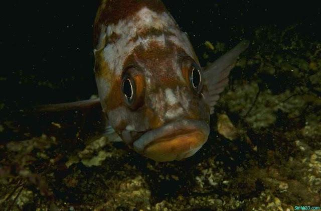 Hình ảnh đẹp về cá trong lòng đại dương