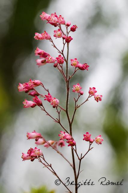 Variations sur thème de fleur