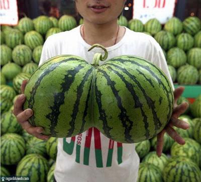 Photos rigolotes et surprenantes Alimentation - Pastèque v10