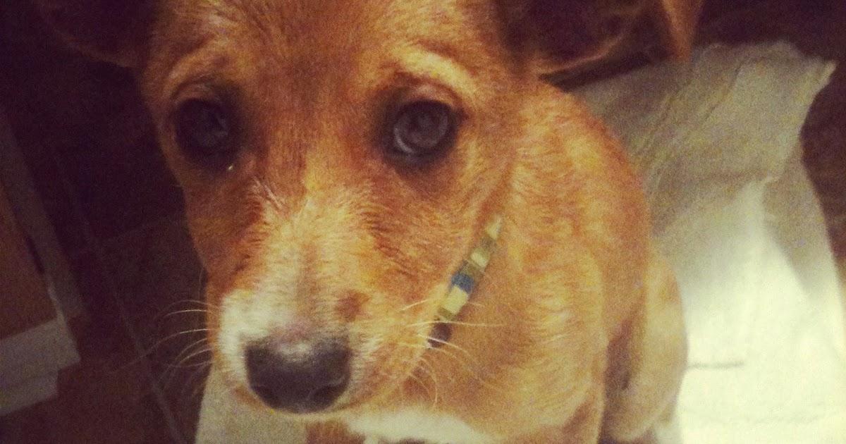 Sad puppy dog face please