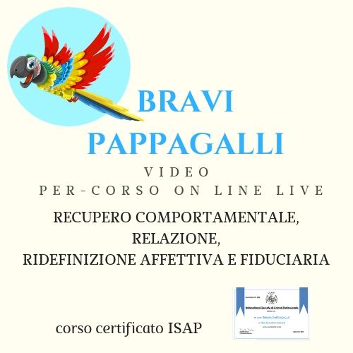BRAVI PAPPAGALLI VIDEO PER-CORSO ON LINE LIVE